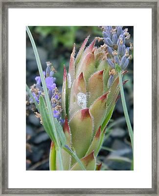 Of Lavender And Hens Framed Print by Debbi Saccomanno Chan