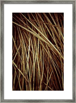 Of Needles And Haystacks Framed Print by Odd Jeppesen