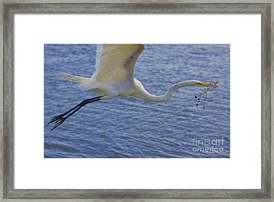 Off To The Nest Framed Print by Deborah Benoit