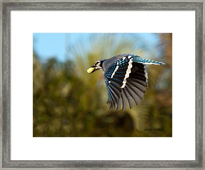 Off To The Nest Framed Print by Don Durfee