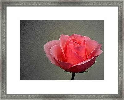 Office Rose Framed Print by Al Cash