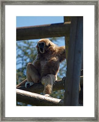 Oh Boy Some Monkey Business Framed Print