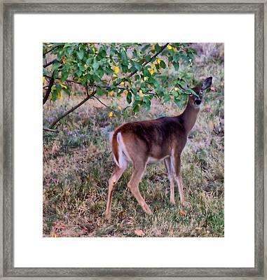 Oh Deer Me Framed Print by Myrna Migala