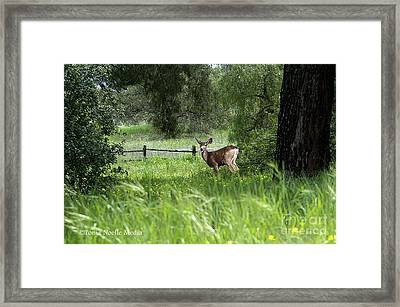 Framed Print featuring the photograph Oh Deer by Tonia Noelle
