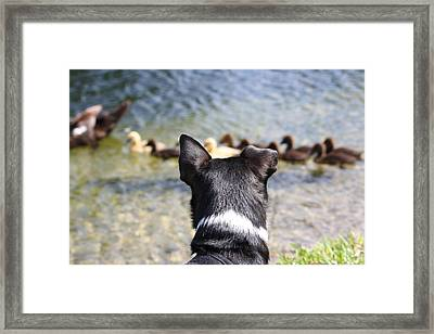 Oh He Wants To Play With Ducks Framed Print by Andrea  OConnell