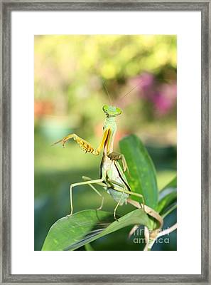 Oh My  Framed Print by Gary Bridger
