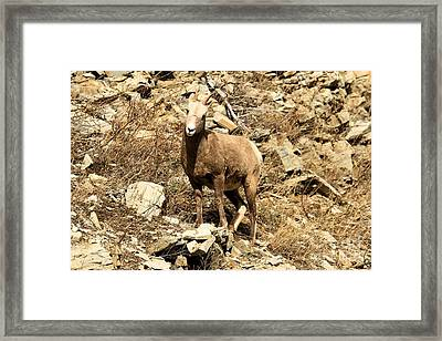 Oh Really? Framed Print by Adam Jewell