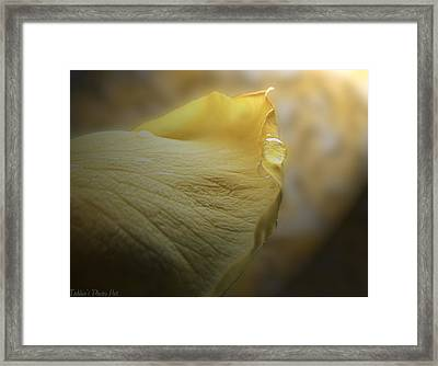 Framed Print featuring the photograph Oh So Soft Is The Kiss Of Dew by Debbie Portwood