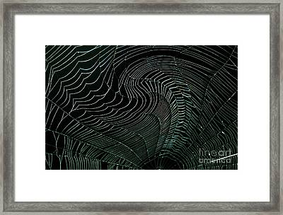 Oh What A Twisted Web..... Framed Print by Monica Poole
