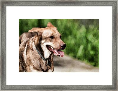 Oily Dog Framed Print