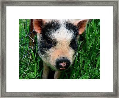 Oink-ing It Up... Framed Print