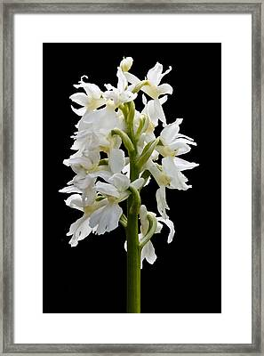 O'kelly's Spotted Orchid Framed Print by Rob Hemphill
