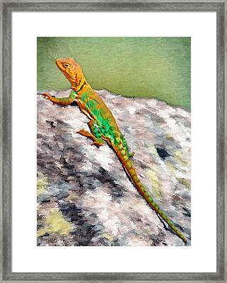 Oklahoma Collared Lizard Framed Print by Jeffrey Kolker