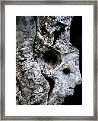 Old Ancient Olive Tree Spain Framed Print by Colette V Hera  Guggenheim