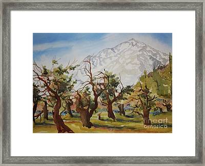 Old Apple Orchard Mt Tom View Framed Print by Pat Crowther