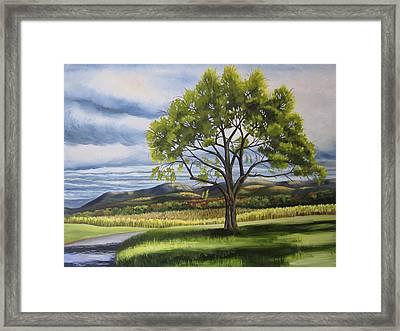 Old Apple Tree Framed Print by Linda L Doucette