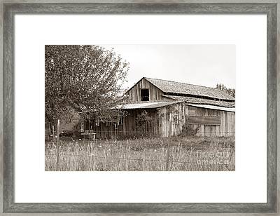 Old Barn In Sepia  Framed Print by Connie Fox
