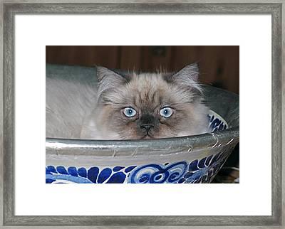 Old Blue Eyes Framed Print by Inga Smith
