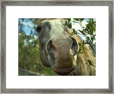 Old Gray Mare Framed Print by Patricia Greer