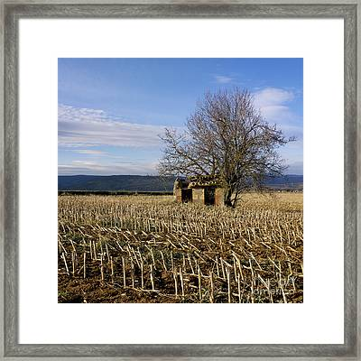 Old Hut Isolated In A Field. Auvergne. France Framed Print