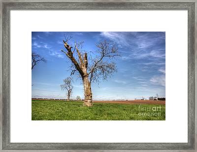 Old Oak Framed Print by David Bearden