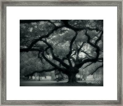 Old Oak Framed Print by Perry Webster