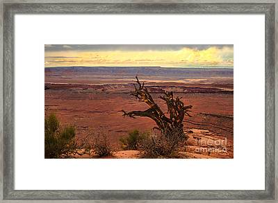 Old One Framed Print by Robert Bales