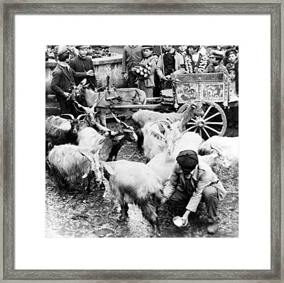 Old Palermo Sicily - Goats Being Milked At A Market Framed Print by International  Images