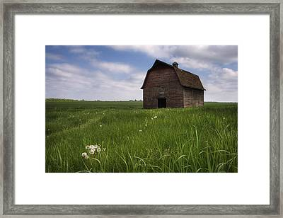 Old Red Barn And A Field Of Dandelions Framed Print by Dan Jurak
