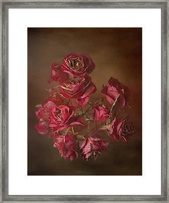 Old Roses Framed Print by Karen Martin