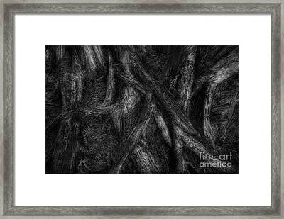 Old Silvery Roots Framed Print