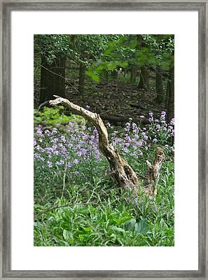Old Stump 7383 1762 Framed Print