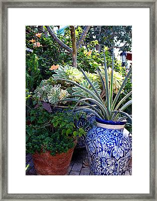 Old Town Potted Cactus Framed Print