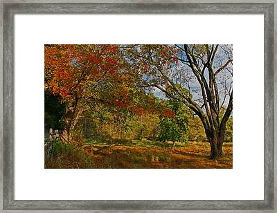 Old Tree And Foliage Framed Print