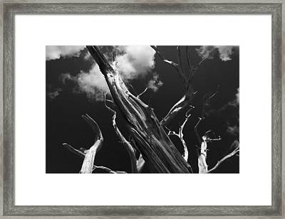 Framed Print featuring the photograph Old Tree by David Gleeson