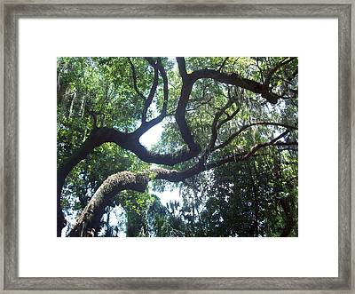 Old Tree Framed Print by Lisa Williams