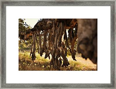 Old Tree Roots Framed Print by Parikshat sharma