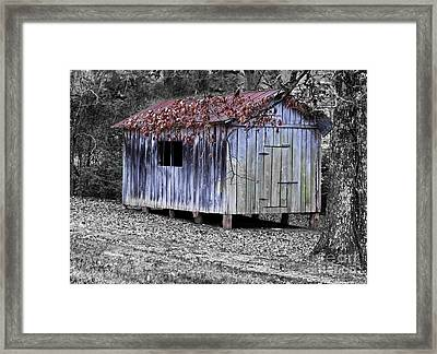 Old Weathered Shed Framed Print by Betty LaRue