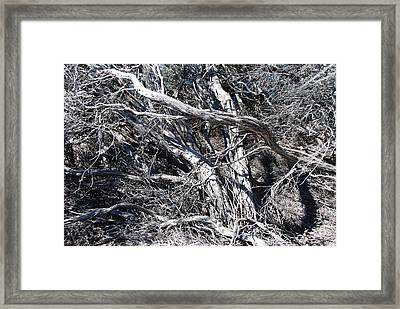 Old Wind Swept Tree Framed Print