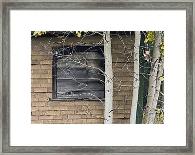 Old Window And Aspen Framed Print