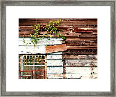 Old Wooden Shack Framed Print by Yali Shi