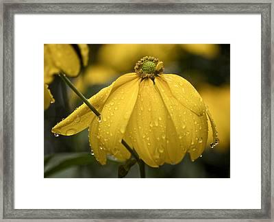Old Yellow Raincoat Framed Print