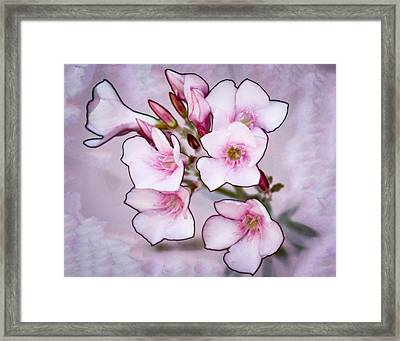 Oleander Blossoms Framed Print by Jim Painter