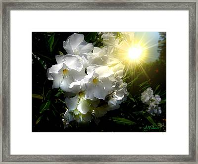 Oleander Sun Framed Print
