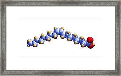Oleic Acid, Computer Model Framed Print by Dr Mark J. Winter