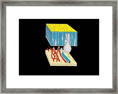 Olfactory Epithelium, Artwork Framed Print