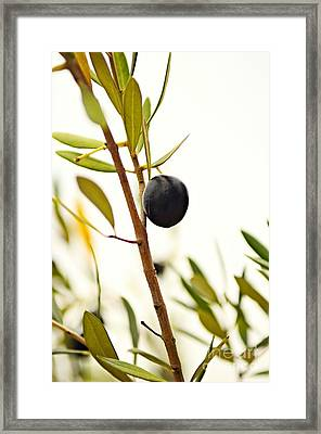 Olive Branch Framed Print by Dean Harte