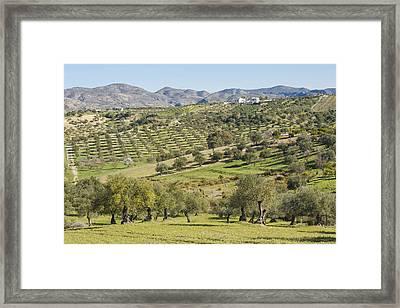 Olive Groves, Southern Spain. Framed Print by Ken Welsh