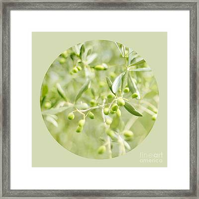 Olive O Framed Print by Linde Townsend