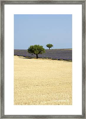 Olive Trees. Provence Framed Print by Bernard Jaubert